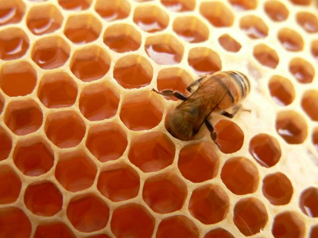 bigstock Macro of working bee on honey 25963553